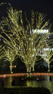 光る木.jpg
